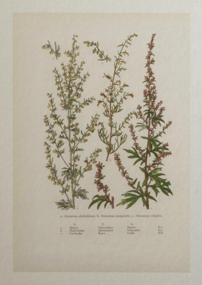 detalle de flores de los papeles pintados botanica